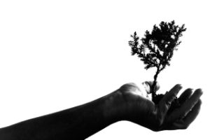 Graphic with hand holding tree