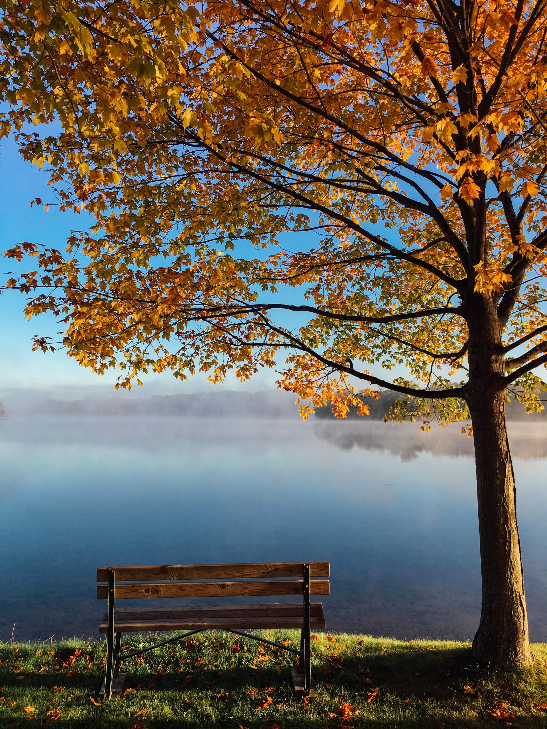 bench next to a lake in the fall